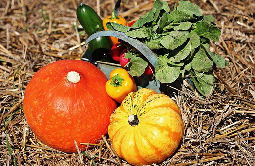 Thanksgiving, Pumpkins, Cucumbers, Paprika, Radishes