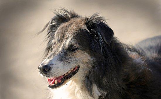 Dog, Animals, Pet, Hybrid, Mammal, Friends, Race, Run