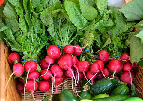 Red Radish, Radish, Vegetable, For Sale, Sell, Buy