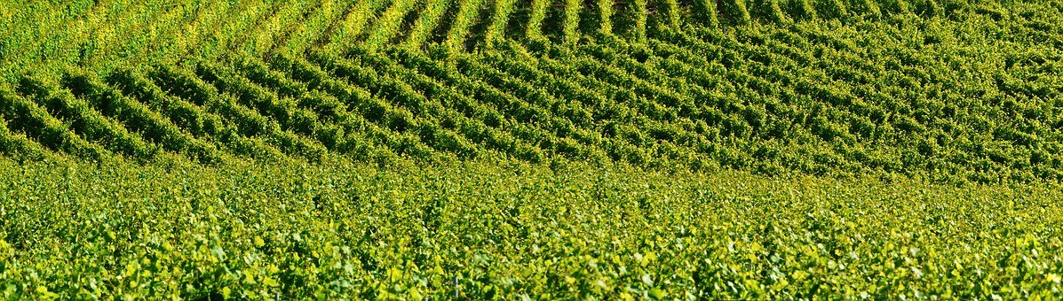 Vineyard, Relief, Background, Shades Of Green