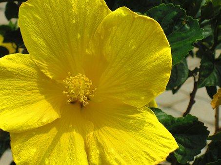 Buttercup, Spring, Flower, Yellow, Staten Island