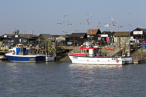 Southwold Harbour, Suffolk, Fishing Boats, Seabirds