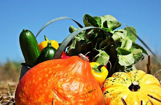 Thanksgiving, Pumpkins, Cucumbers, Paprika, Radishes