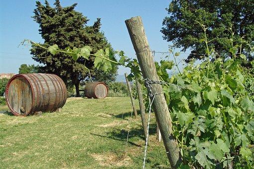 Vines, Wine, Winegrowing, Vineyard, Grapes, Wine Barrel