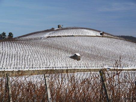 Vineyard, Winter, Snow, Wintry, Dream Day, White, Cold