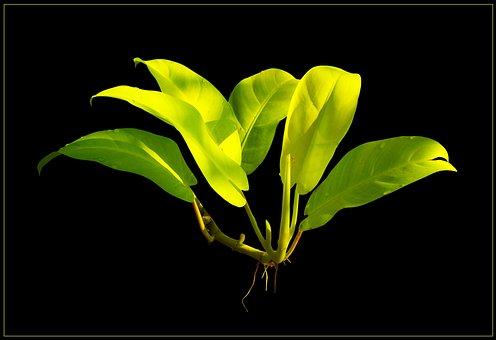 Leaf, Green Leaf, Leaves, Aerial Roots