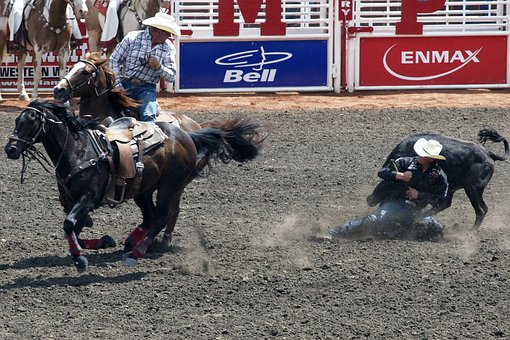Stampede, Clagary, Canada, Horses, Animals, Young Cows