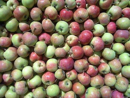 Apple, Apple Harvest, Red Apple, Apples