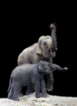 Elephant, Baby Elephant, Isolated, Illustration, Trunk