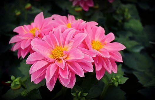 Flowers, Pink Flowers, Nature, Pink, Bloom, Color