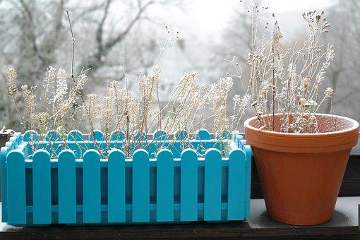 Flower Box, Flowers, Flowerpot, Winter, Frozen, Frost