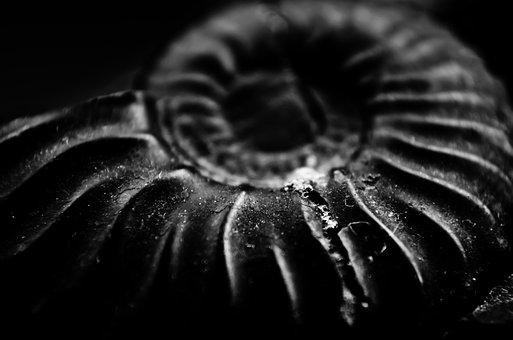 Fossil, Snail, Old, Ancestral, Nature, Sea, Animals