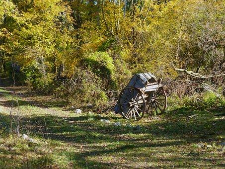 Landscape, Forest, Path, Nature, Fall, Charette
