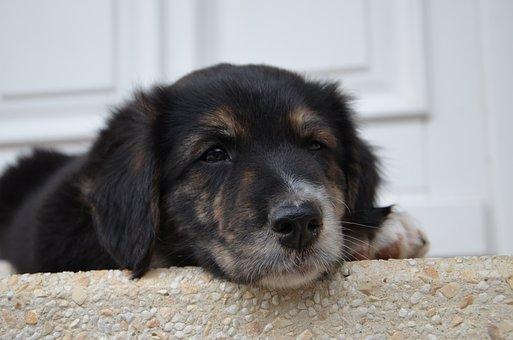 Dog, Puppy, Cute, Young Dog, Small Dog, Animal Portrait