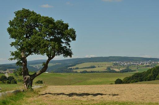 Tree, Landscape, Nature, Erratic, Agriculture