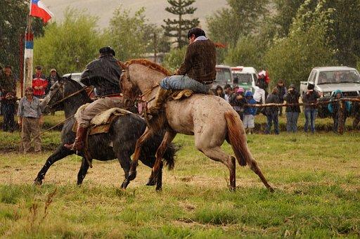 Horses, Mountain, Animals, Field, Mountains