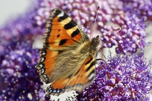 Butterfly, Nature, Flower, Color, Forage, Insect