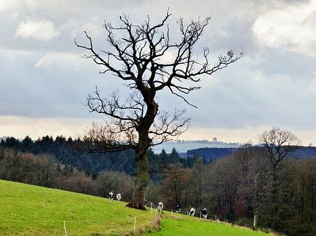 Tree, Erratic, Landscape, Cows, Nature