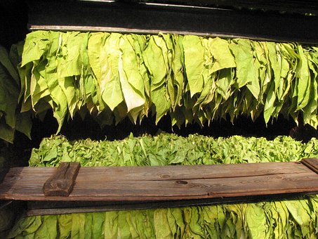 Tobacco, Tobacco Leaves, Tobacco Serious, Read