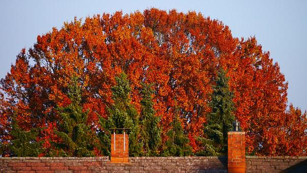 Autumn, Tree, Tree In The Fall, Colorful, Browns, Light