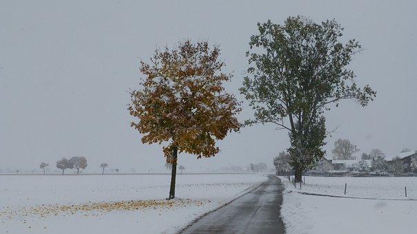 Loneliness, Road, Trees, Coldsnap, Trist, Allgäu