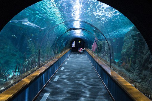Shark Tunnel, Aquarium, Loropark, Underwater