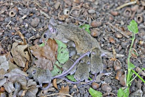 Mouse Young, Upbringing, Mouse, Young Mice