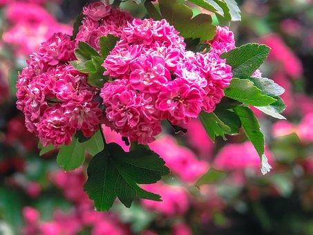Flowers, Trees, Leaves, Nature, Backyard, Petals, Focus