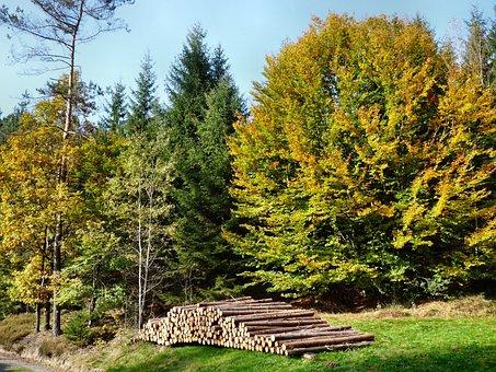 Harbst, Trees, Tree, Wood, Nature