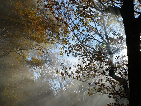 Foliage, Branches, Sun, Sky, Nature, Trees, Fall