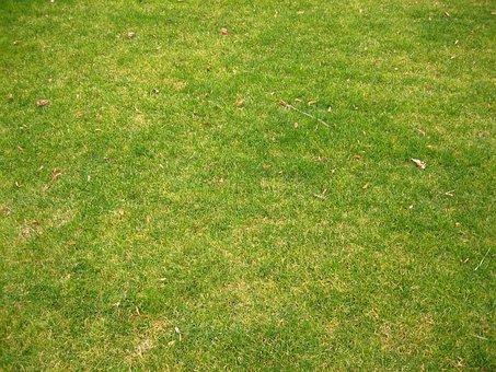 Short, Grass, Landscapes, Nature