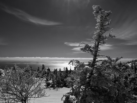 Maine, Landscape, Black And White, Forest, Trees