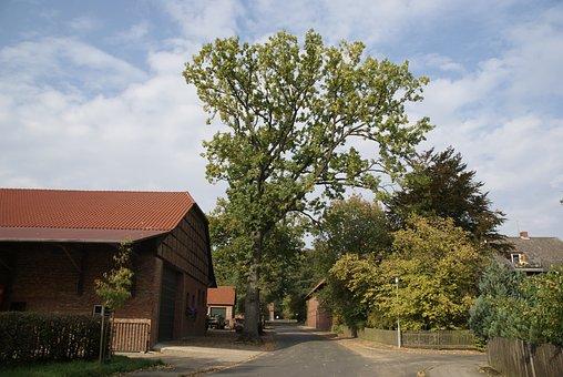 Agriculture, Bauer, Village, Edemissen, Oak, Tree