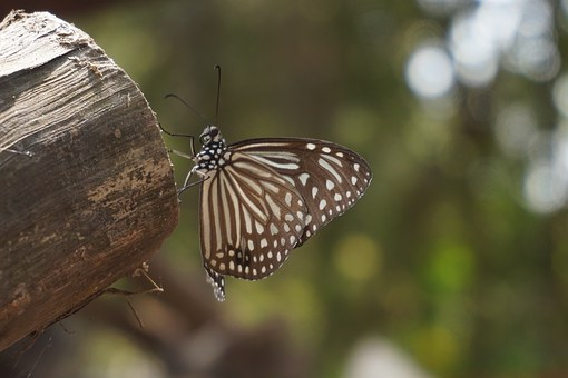 Butterfly, Vietnam, Gao Giong Eco-tourism