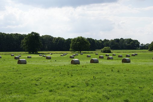 Agriculture, Straw, Hay, Bale, Meadow, Landscape