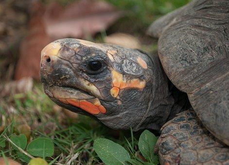 Morrocoy, Turtle, Nature, Outside, Macro, Close-up