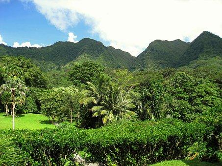 Hawaii, Hills, Tree, Hawaiian, Forest, Mountains