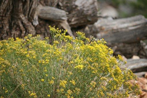 Plant, Yellow, Desert, Sand, Bush, Leaf, Bright, Color