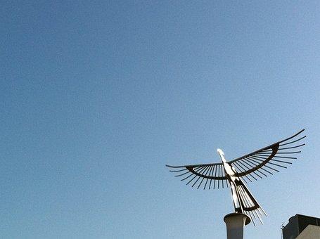 Bird, Gold Belong, White Space, Sky