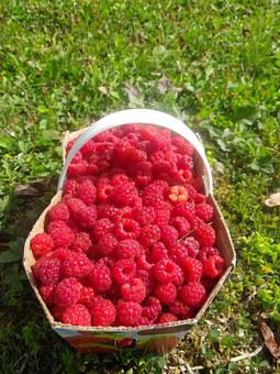 Raspberry, Basket, Summer, Fruit, Berries, Collection