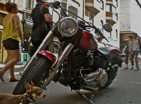 Bike, Dog, Pedestrian Traffic, City Life, Stockholm