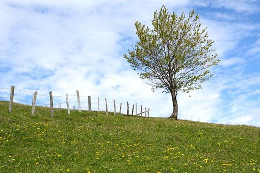 Sky, Meadow, Pasture, Tree, Fence, Barbed Wire, Nature