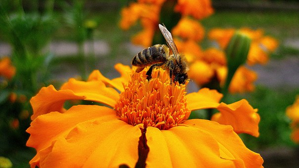 Wasp, Flower, Nature, Insect, Animal, Garden, Nectar