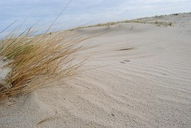 Spiekeroog, Dunes, North Sea, Beach Grass, Beach, Sand