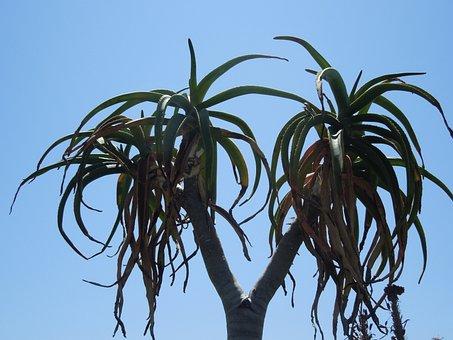 Double-headed, Nature, Plant, Green, Leaf, Leaves, Aloe