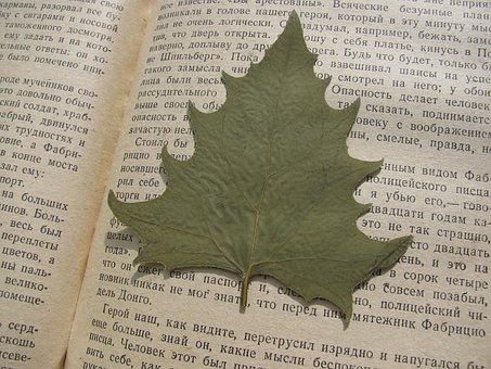 Herbarium, Sheet, Leaves, Book, Autumn