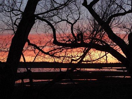 Cotton Woods, Sunrise, Sky, Night, Dusk, Orange Sky