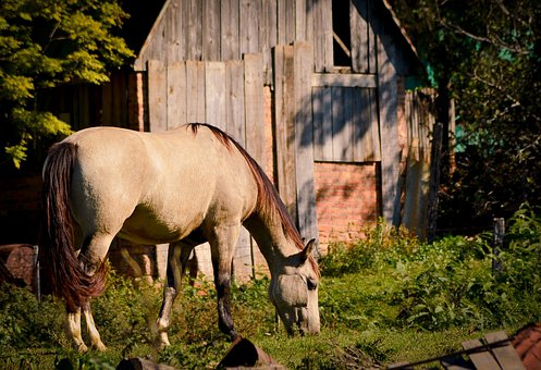 Horse, Grazing, Graze, Barn, Mammal, Animal, Farm, Mare