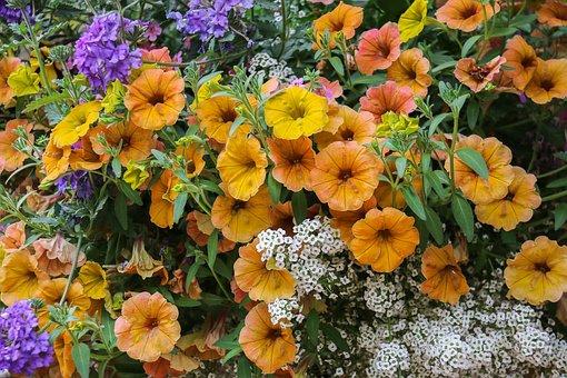 Flowers, Jardiniere, Nature, Garden, Colors