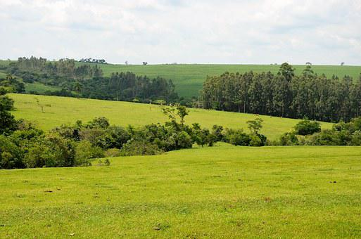 Landscape, Nature, Jau Brazil, Rural, Trees